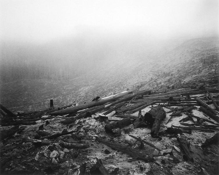 Mark Ruwedel, Gifford Pinchot National Forest, Washington. ©Mark Ruwedel