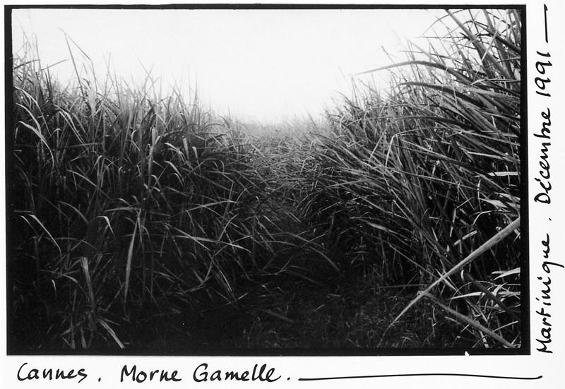 Serge Jongué, Cannes, Morne Gamelle, Martinique © Serge Jongué
