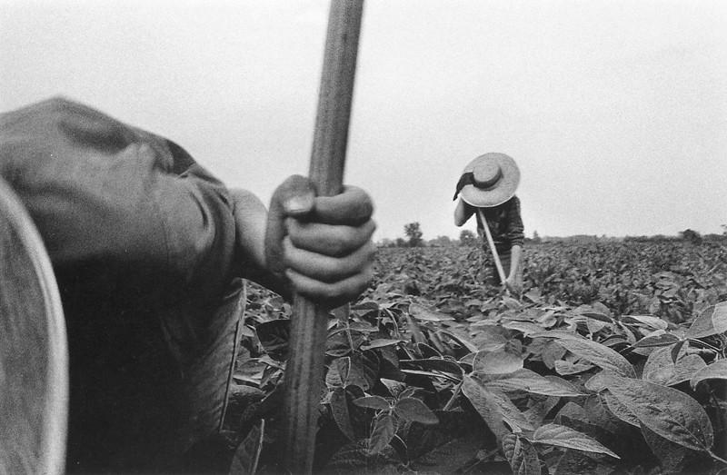 Larry Towell, Les enfants sont souvent retirés des écoles pour travailler aux champs. ©Larry Towell
