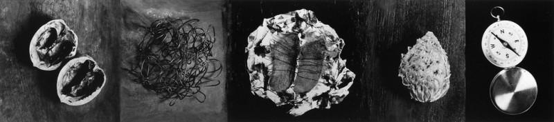 Lucie Lefebvre, Ours, 1991, extrait de la série Salle d'urgence, original en couleurs, 40 x 183 x 8 cm. ©Lucie Lefebvre