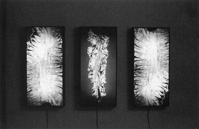 Lucie Lefebvre, Laminaria Saccharia, 1991, extrait de la série Salle d'urgence, boîtes lumineuses, pièce originale en couleurs, 210 x 122 x 20 cm. ©Lucie Lefebvre