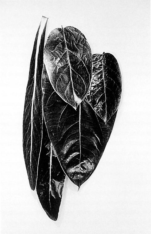 Roberto Pellegrinuzzi, Nature morte, 1989-1991, épreuve argentique, 2.60 x 1,30 x 0,35 cm, courtoisie de la Galerie Brenda Wallace, Montréal. © Roberto Pellegrinuzzi