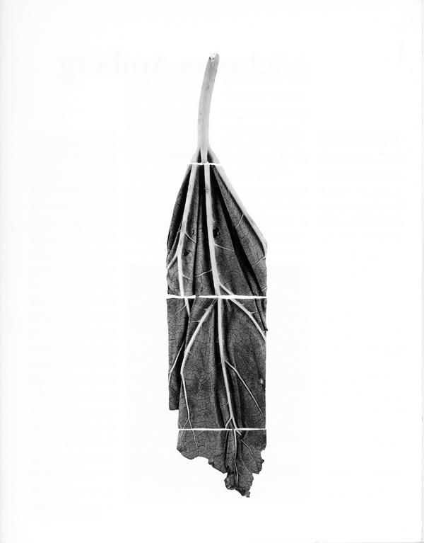 Roberto Pelligrinuzzi, Trophée #229, 1991, épreuves argentiques, 156 x 31.5 x 4 cm, édition de cinq. © Roberto Pellegrinuzzi