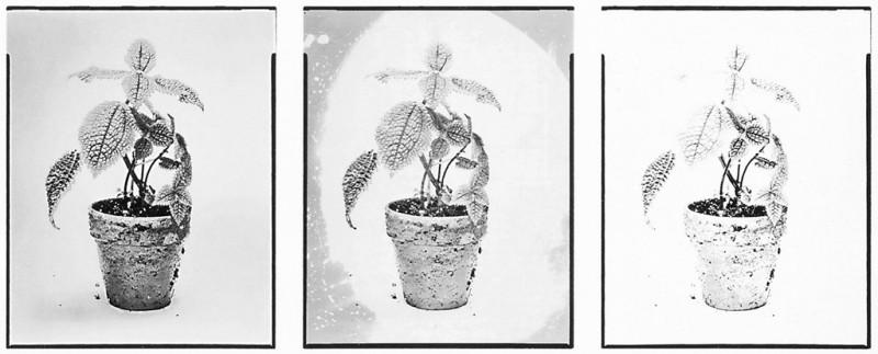 Kelly Lycan, Sans titre (de la série Green House Plants), épreuves sur pellicules orthochromatiques de formats variables. © Kelly Lycan