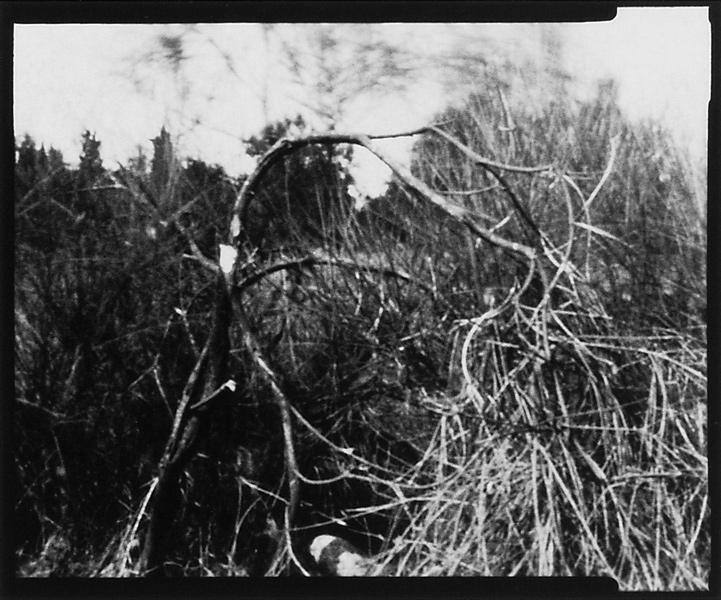 Michel Lamothe, Nature morte, 1994, épreuves argentiques reproduites par contact. ©Michel Lamothe