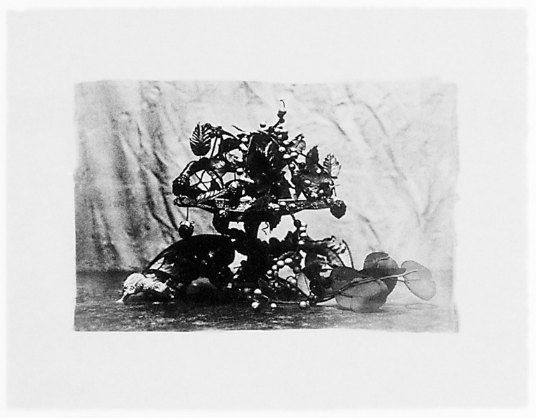 Ginette Bouchard, Floris Umbra n° X, 1995, 65 x 90 cm, émulsion au palladium sur papier Rives BFK. ©Ginette Bouchard