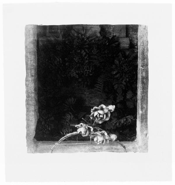 Ginette Bouchard, Floris Umbra n° IV, 1995, 65 x 77 cm, émulsion au palladium sur papier Rives BFK. ©Ginette Bouchard