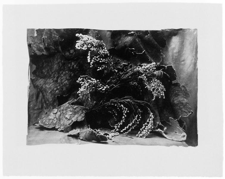 Ginette Bouchard, Floris Umbra n° XI, 1995, 66 x 90 cm, émulsion au palladium sur papier Rives BFK. ©Ginette Bouchard