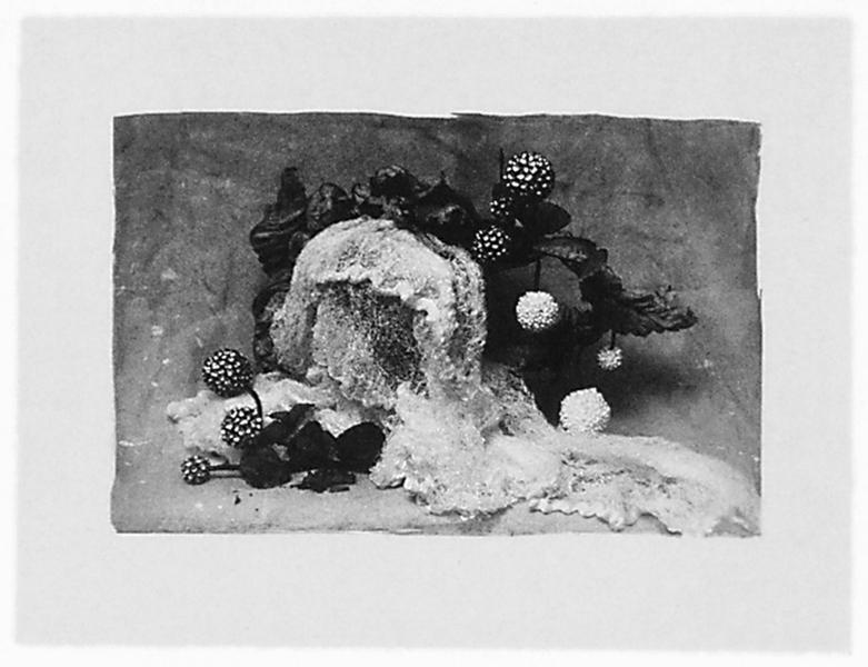 Ginette Bouchard, Floris Umbra n° IX, 1995, 65 x 90 cm, émulsion au palladium sur papier Rives BFK. ©Ginette Bouchard