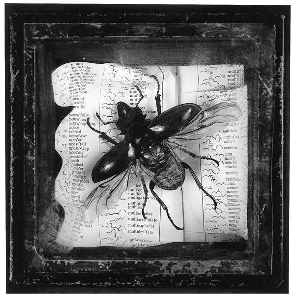 Loren Williams, Sans titre, de la série Cabinet de curiosités, preuves couleurs et étagères de bois, 20 x 22 cm, 1995. © Loren Williams