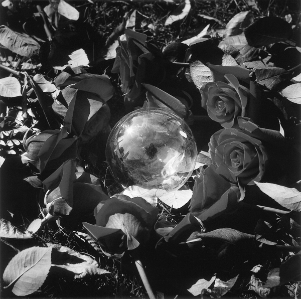Holly King, Rose Remembered, épreuve en couleur, 1997.© Holly King
