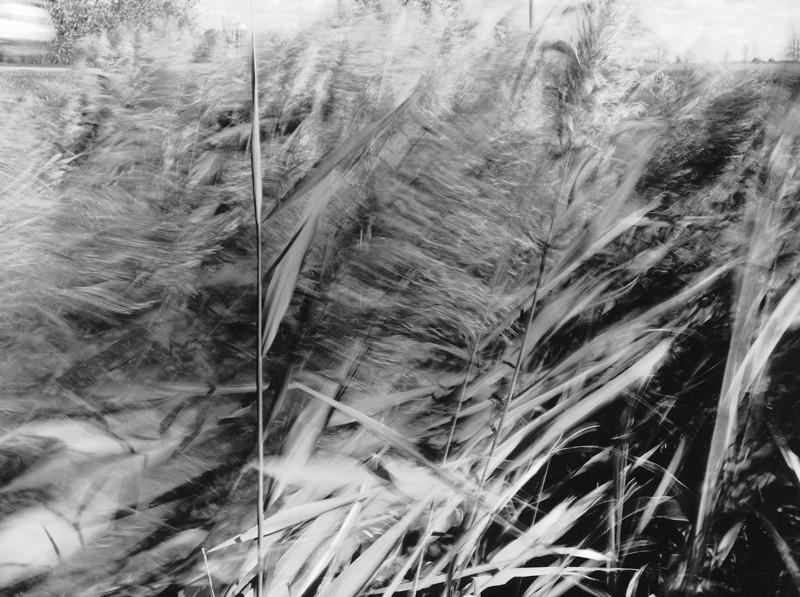 Sylvie Readman, Reflux ou les herbes fraîches, 1995, 124 cm x 166 cm, épreuve argentique. ©Sylvie Readman
