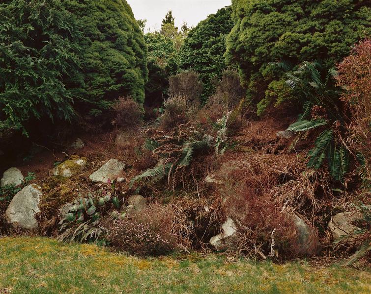 """Scott McFarland, Border Study, Polystichum Munitum, Calluna Vulgaris, Picea Glauca Var, Albertina """" Conica """", colour print, 76 x 96cm, 1999. © Scott McFarland"""