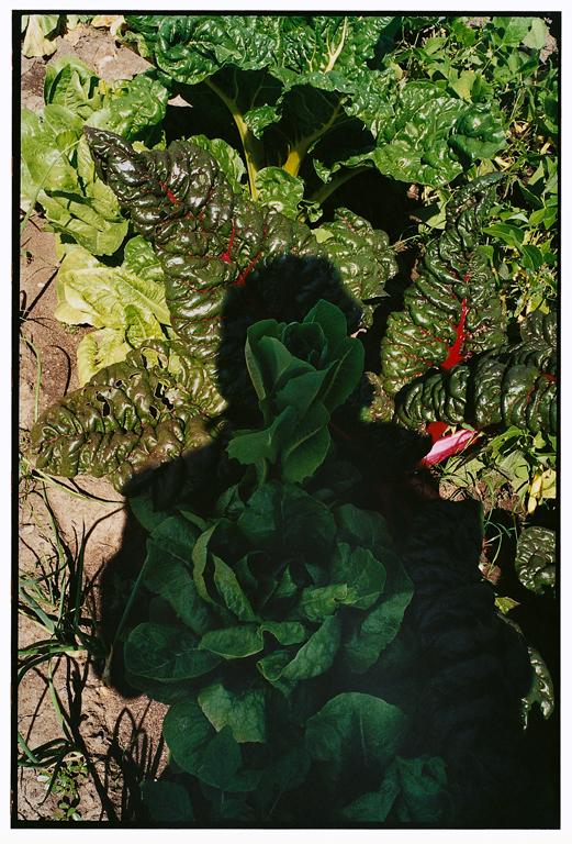 Michel Campeau, Arborescences épreuves couleur et à jet d'encre, 2000. © Michel Campeau