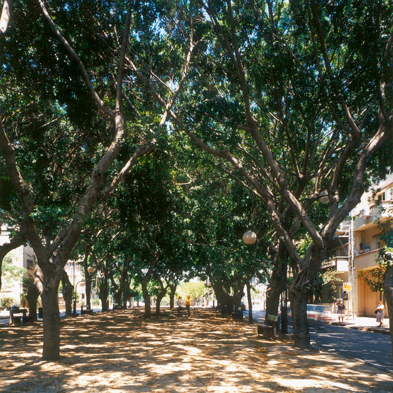 Banyan Tree, Rothschild Blvd, Tel Aviv, 1997–2000, 61 x 61 cm, colour prints. © Arni Haraldsson