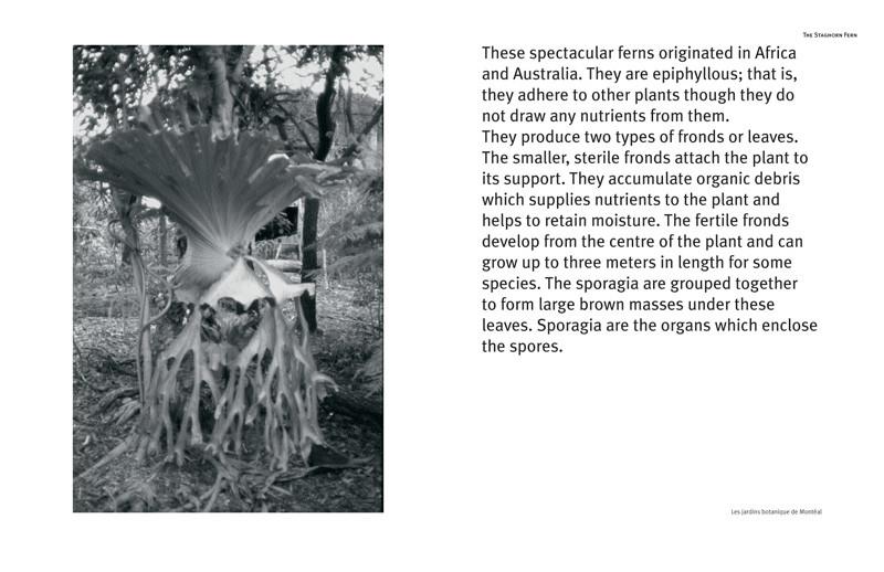 Angela Grauerholz, Épiphytes (extraits). © Tous droits reservés