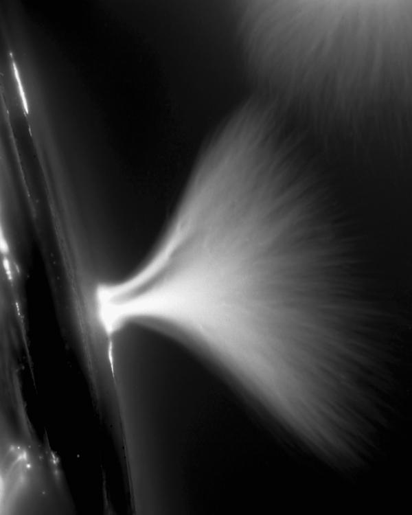 Marie-Jeanne Musiol, prélèvement : Hosta (détail), 2005, électrophotographie, dimensions variables. © Marie-Jeanne Musiol