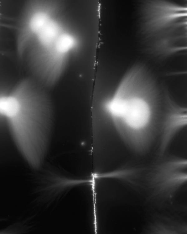 Marie-Jeanne Musiol, prélèvement : Hosta (détail), dimensions variables, électrophotographie, 2005. © Marie-Jeanne Musiol