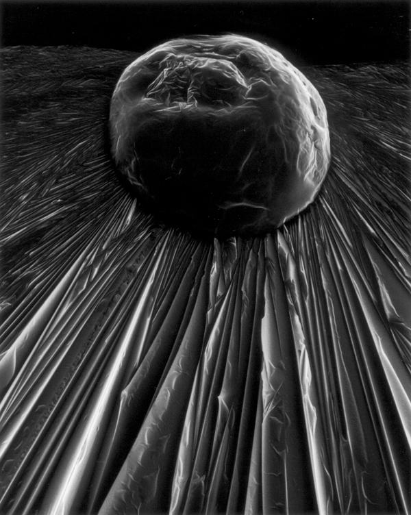Claudia Fährenkemper , Ascorbic Acid (400x), 2002, from the series Habitus, silver prints on fibre-based paper, 42 x 53 cm. © Claudia Fährenkemper