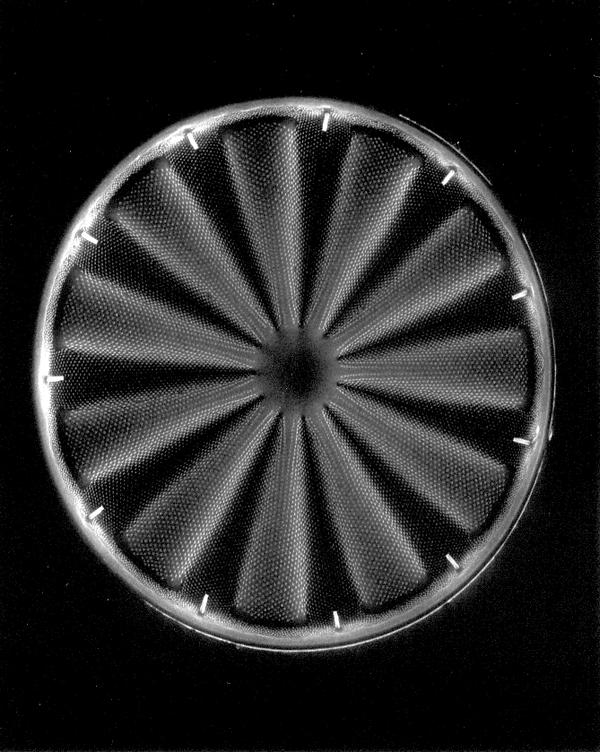 Claudia Fährenkemper, Diatom (800x), 2005, from the series Planktos, silver prints on fibre-based paper, silver prints on fibre-based paper, 20 x 25 cm. © Claudia Fährenkemper