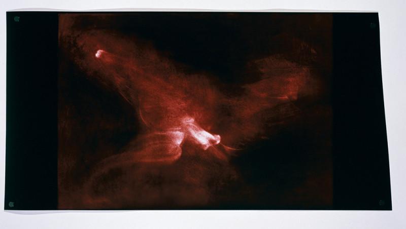 Paul Lacroix, Sans titre, 2000, photogramme, 76 x 148 cm. © Paul Lacroix