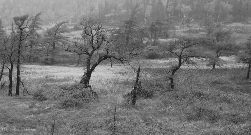 Thaddeus Holownia, Trout River Gulch, 2001 © Thaddeus Holownia
