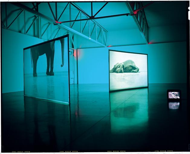 Douglas Gordon, Play Dead; Real Time, installation video avec deux écrans, moniteur et vidéo couleur, 21 min. et 11 min. en boucle, dimensions variables, 2003, vue d'installation à la Gagosian Gallery, N.Y., the Museum of Modern Art, N.Y., don de Richard J.Massey, photo : Robert McKeever. © Douglas Gordon