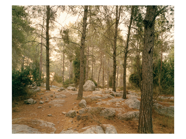 Oliver Chanarin and Adam Broomberg, From the series Forest, chromogenic print, 121.9 x 170.2 cm, 2005. © Oliver Chanarin and Adam Broomberg