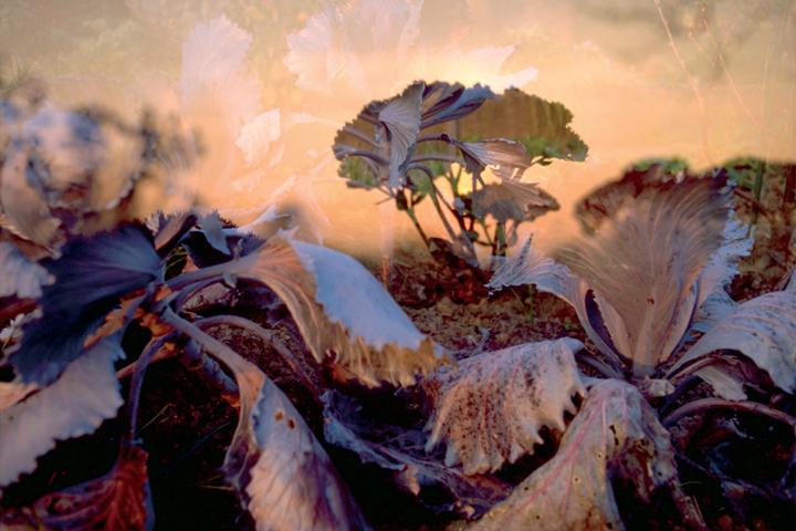 Fischli & Weiss, Flowers, colour photograph, 1998. © Fischli & Weiss