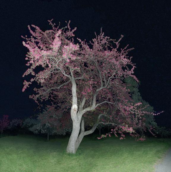 Jocelyn Philibert, Sans titre (Pommetier rose), 2005, jet d'encre sur toile, 152,4 cm x 152, 4 cm. © Jocelyn Philibert