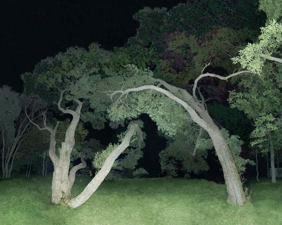 Jocelyn Philibert, Sans titre (Saules), 2005, jet d'encre sur toile, 152,4 cm x 190,6 cm. © Jocelyn Philibert
