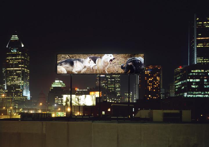 Carlos et Jason Sanchez, Natural Selection, 2005, vue d'installation, 2,13 x 9,15 m, reproduite avec l'aimable permission de Plan large. © Carlos et Jason Sanchez