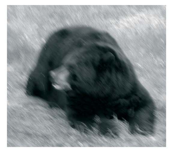Le réveil de l'ours noir, 2006, de la série Les rivières de feu, épreuve au jet d'encre sur papier chiffon, 120 x 137 cm. © Reno Salvail