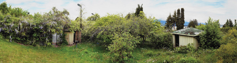 Scott McFarland, Orchard View, Late Spring; Vitis vinifera, Wisteria, 2004, from the series Gardens, chromogenic print, Canadian Museum of Contemporary Photography, Ottawa.