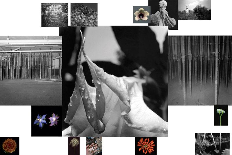 Yan Giguère, Attractions, 2009, épreuves à la gélatine argentique et impressions jet d'encre / gelatin silver prints and inkjet prints, various dimensions. © Yan Giguère