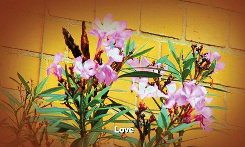 Keren Cytter, Flowers, 2009, image tirée du triptyque vidéo Untitled (Cross, Flowers, Rolex), 15 min. © Keren Cytter