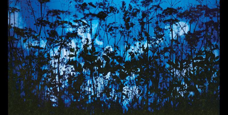 Susan Derges, Arch 4 (summer), 2007-2008, digital c-print, 220 x 150 cm. © Susan Derges