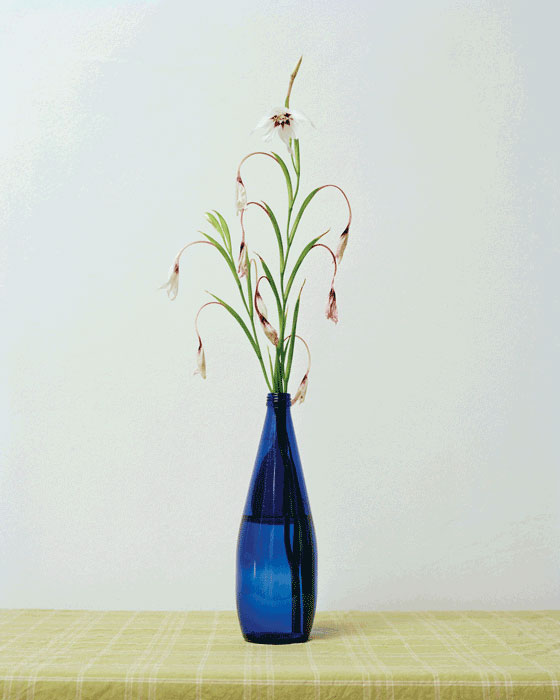Chih-Chien Wang, Blue Bottle, 2011, inkjet print, 101,6 x 81,3 cm. © Chih-Chien Wang