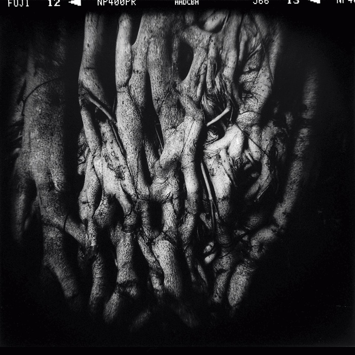 Philippe Lopparelli, Tagore's Tree, Pani Hati, Inde, 2008. © Philippe Lopparelli