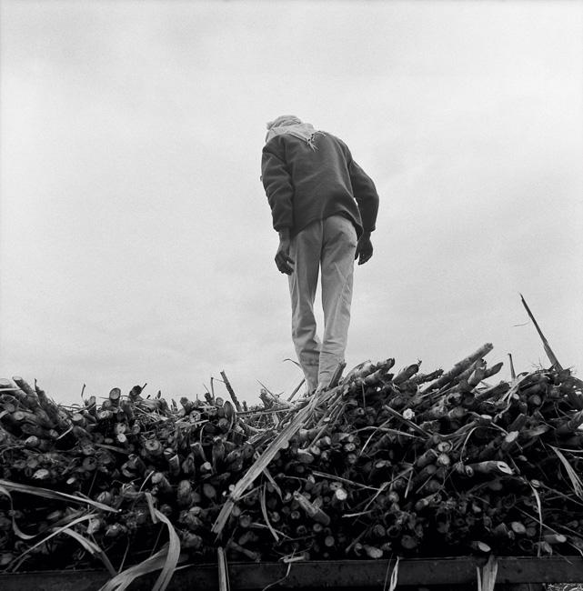 Thierry Ardouin, Farmlands, Inde, 2008. © Thierry Ardouin