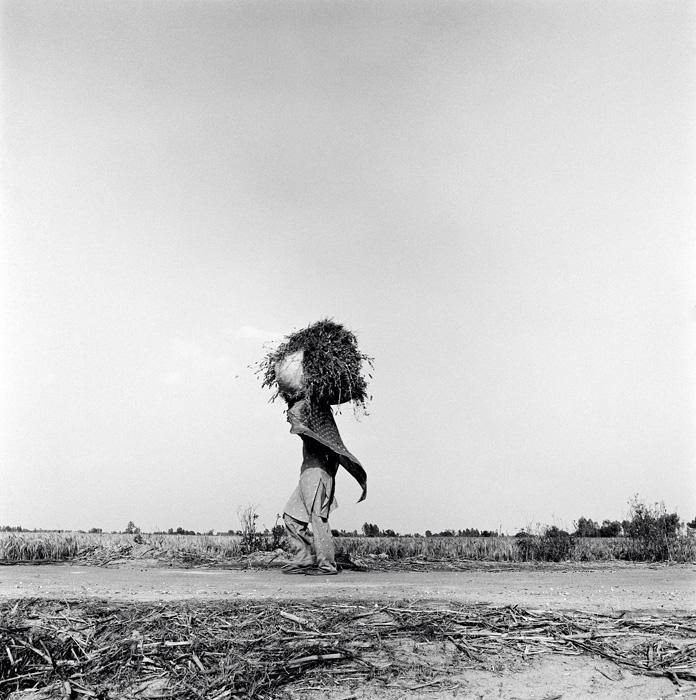 Thierry Ardouin, Farmlands, Santokh Majra, Haryana, Inde, 2008. © Thierry Ardouin