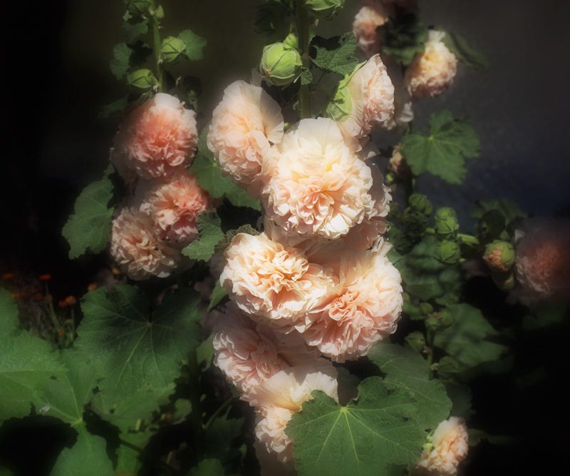 Marisa Portolese, Carnations (A Mother's Tears), 2010, 30 x 127 cm. © Marisa Portolese