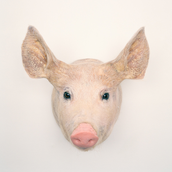 Kim Waldron, Pig Head, 2011, impression jet d'encre / inkjet print, 61 x 61 cm. © Kim Waldron