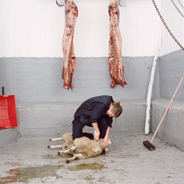 Kim Waldron, Lamb Slaughter, 2010, impression jet d'encre / inkjet print, série de / from series of 9 images, 94 x 94 cm ch. / ea. © Kim Waldron