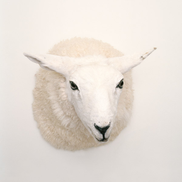 Kim Waldron, Lamb Head, 2011, impression jet d'encre / inkjet print, 61 x 61 cm. © Kim Waldron
