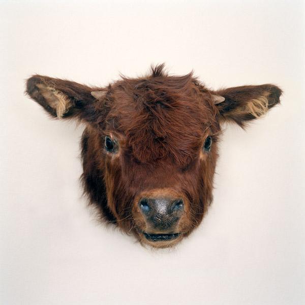 Kim Waldron, Calf Head, 2011, impression jet d'encre / inkjet print, 83 x 83 cm. © Kim Waldron