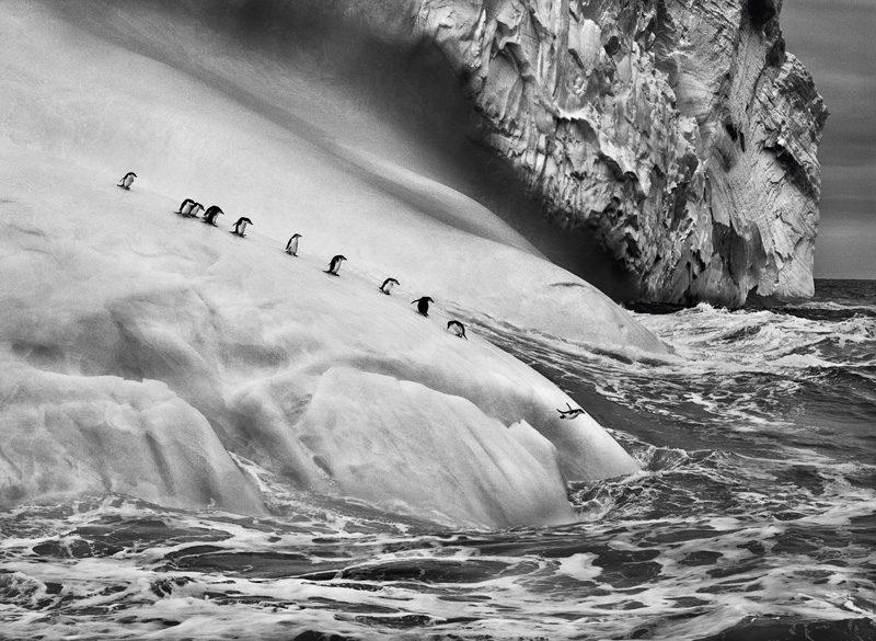 Sebastião Salgado, Chinstrap penguins (Pygoscelis antarctica) on an iceberg located between Zavodovski and Visokoi islands. South Sandwich Islands, 2009. © Sebastião Salgado / Amazonas Images