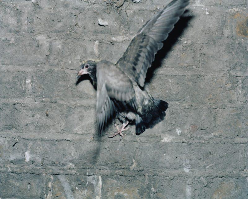 Stephen Gill, from the series / de la série Pigeons, 2012, c-prints / épreuves chromogènes, 28 x 35 cm, courtesy of the artist / permission de l'artiste