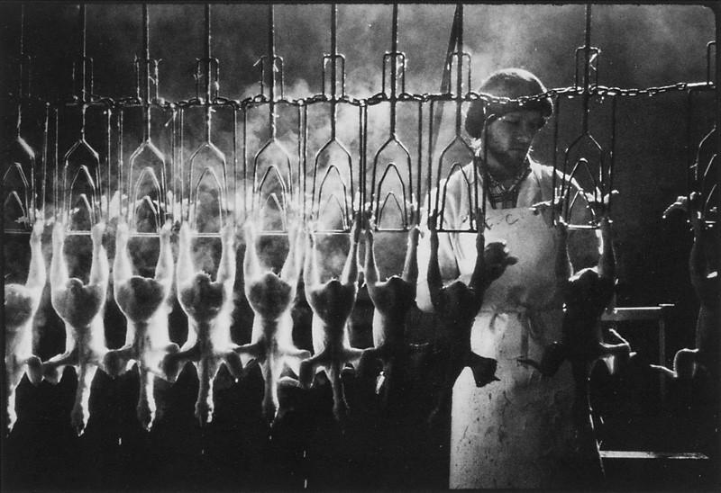 Jean-Francois Leblanc, Abattoir de poulets.  Jean-Francois Leblanc