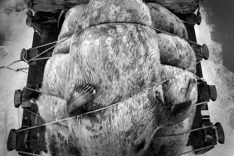 Yoanis Menge, Nunavut, 2013. De la série / from the series HAKAPIK, 2012-2015. 35 épreuves argentiques / 35 gelatin silver prints, 60 × 91 cm ou/or 60 × 163 cm.